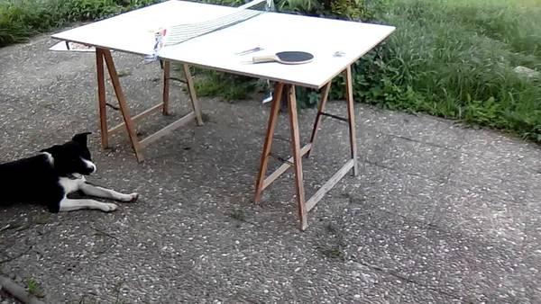 Filet table de ping pong cornilleau decathlon